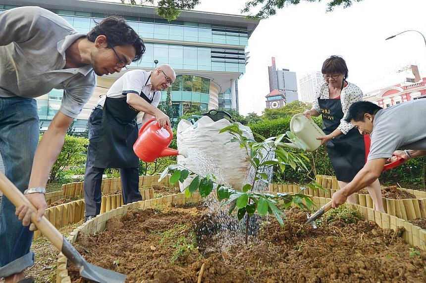 (From left) Imran Aljunied, 28, SMU President Professor Arnoud De Meyer, Mayor for Central Singapore District Denise Phua and urban farmer Donald Tan, 48, plant a nutmeg sapling at the Grow initiative at the Singapore Management University campus on