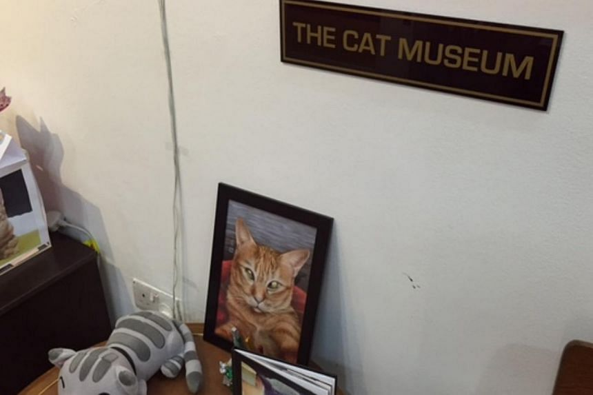Friends of furry felines will be thrilled by a newly launched museum dedicated to cats. Called the Lion City Kitty - The Cat Museum, the three-storey centre located at 8 Purvis Street was launched by Law and Foreign Minister K Shanmugam on Friday eve