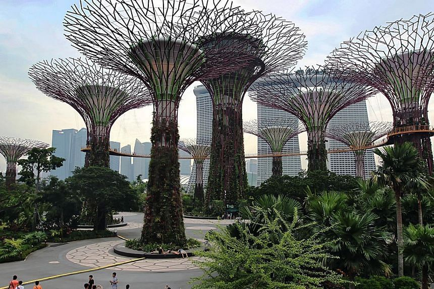 The Supertree Grove at Gardens by the Bay. A photo of the attraction was used by The New York Times when it listed Singapore as no. 6 in a global list of 52 places to visit in 2015. -- PHOTO: ST FILE