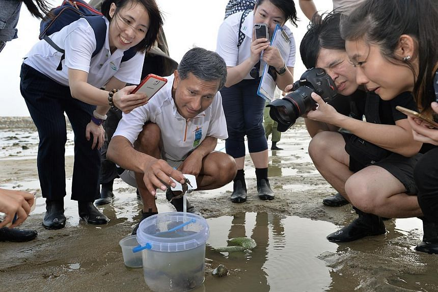 Minister for the Environment and Water Resources Vivian Balakrishnan picking up a seahorse on Big Sister's Island, one of the two islands that make up Sisters' Islands, yesterday. The seahorse is among the many creatures found along the island's coas