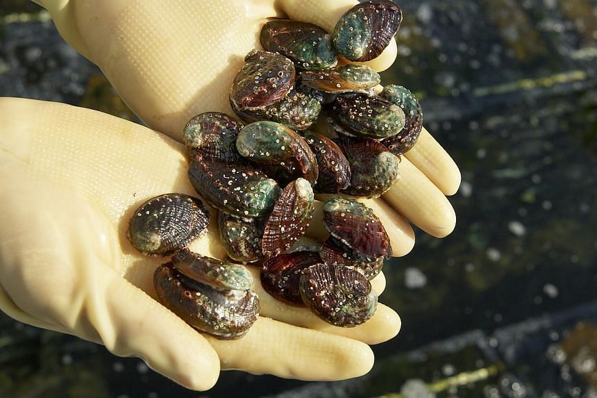 Oceanus is involved mainly in the production and sale of high-value live seafood. The group intends to focus on producing Japanese abalone in the years to come as well as to scale down on fish farming.-- PHOTO: OCEANUS GROUP LTD