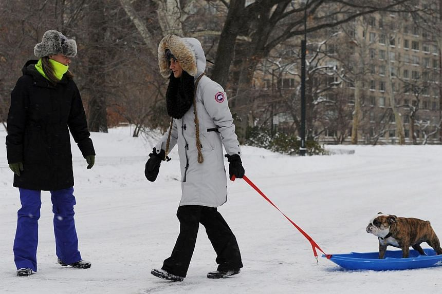 Ms Tara Ferraro (centre) pulling Chunk, an english bulldog, on a plastic sled through Central Park after a snowstorm hit New York on Tuesday. -- PHOTO: AFP
