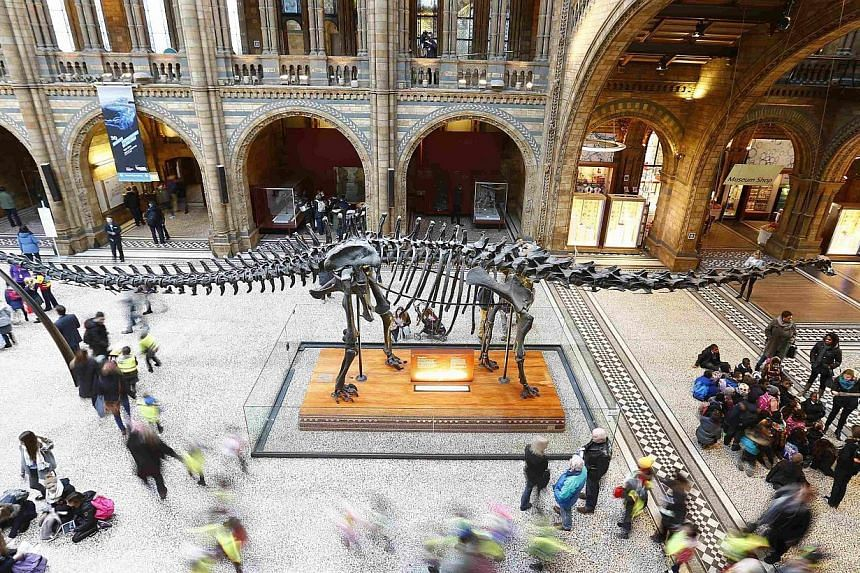 """Visiting school children stream past, as others sit under """"Dippy"""", the moulded resin replica of a fossilised Diplodocus in the main hall of the Natural History Museum in London Jan 29, 2015. -- PHOTO: REUTERS"""