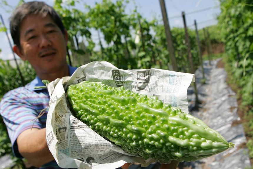 Mr Liao Chuan Huat shows his bittergourd harvest at the family-run farm, Quan Fa organic farm which is home to over 30 types of organic vegetables in Singapore. Mealtimes in Singapore could soon have a stronger local flavour, as the authorities ramp