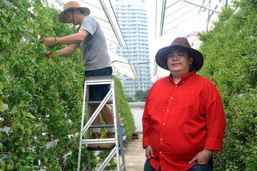 Mr Allan Lim (in red) co-founded founded Comcrop, which is at youth hub *Scape in Orchard Link and supplies herbs to hotels and eateries nearby. -- ST PHOTO: TIFFANY GOH