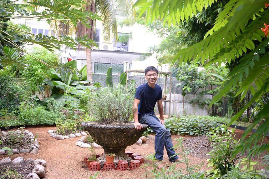 Mr Alexius Yeo in the edible garden he created at his parents' terrace house in Serangoon North. -- ST PHOTO: DANIEL NEO