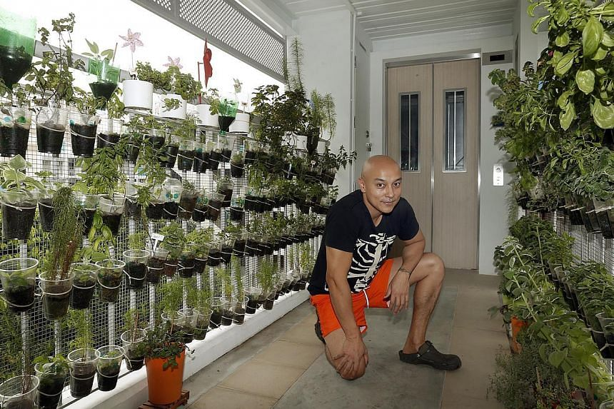 Mr Balan Gopal grows herbs such as dill, woodworm, mint, stevia (on the left) and basil, indian borage, thyme, oregano, lavender and sage (on the right) along the corridor outside his flat. --ST PHOTO: LAU FOOK KONG