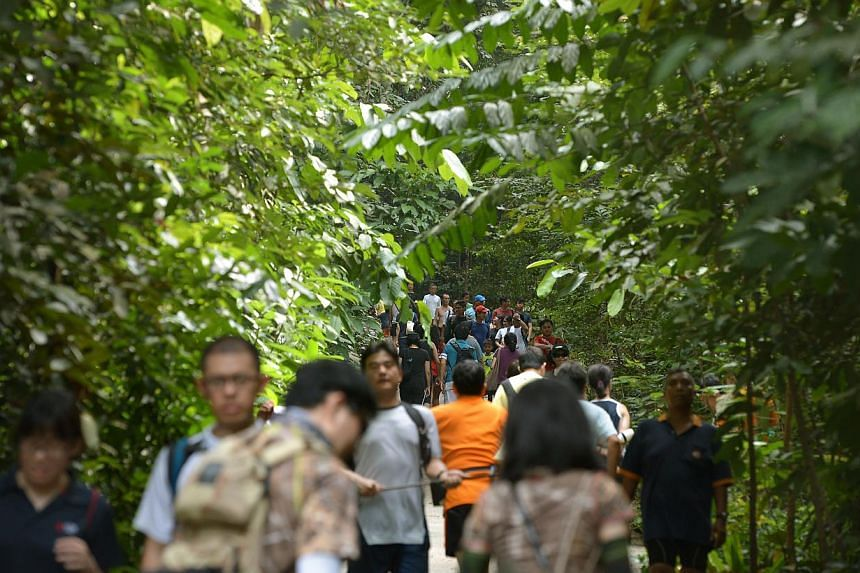 The weekend crowd making their way up the main route of Bukit Timah Nature Reserve on Sept 13,2014. -- ST PHOTO: KUA CHEE SIONG