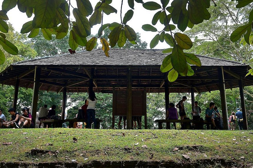 Visitors taking a rest at the Summit Hut at Bukit Timah Nature Reserve. The Summit Hut is where many take a breather and gather for photographs amongst nature and wildlife at the reserve. -- ST PHOTO:KUA CHEE SIONG