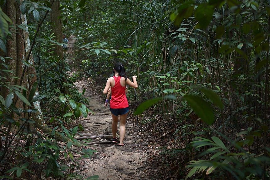 A female trekker walking along the Keruing Path in Bukit Timah Nature Reserve on Sept 13,2014. -- ST PHOTO: KUA CHEE SIONG