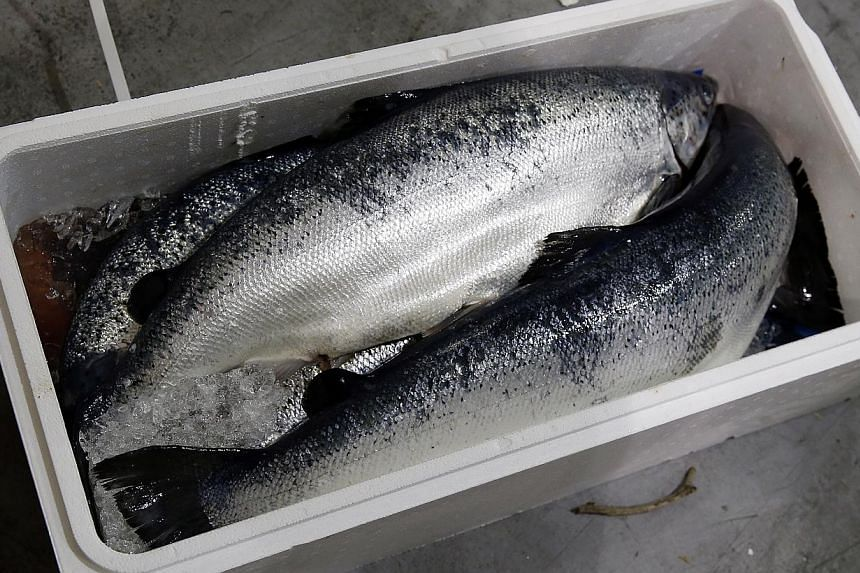 A delivery of fresh Atlantic salmon (above) at Coolchain. The storage facility is so cold that ice can sometimes be found on the floor (left). Sats Coolport staff Thottam Suhaimy Kutty Alif Mohamed (main picture, far right) and Mohan Akhil have to we