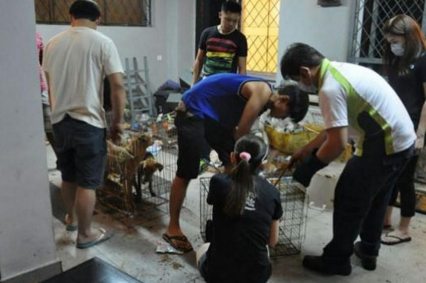 Volunteers rescuing the 24 malnourished dogs after they were found abandoned at a house in Taman Pelangi, Johor Baru. -- PHOTO: THE STAR/ASIA NEWS NETWORK