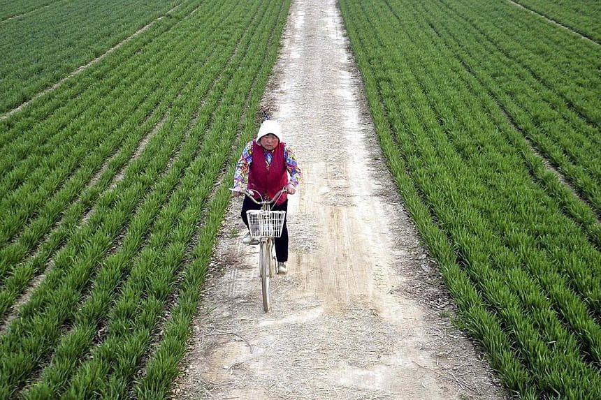 A farmer rides a bicycle along a small alley between wheat fields in Chiping county, Shandong province in this March 24, 2014 file photo.Modernising Chinese agriculture will help in countering slower economic growth by driving investment in rur