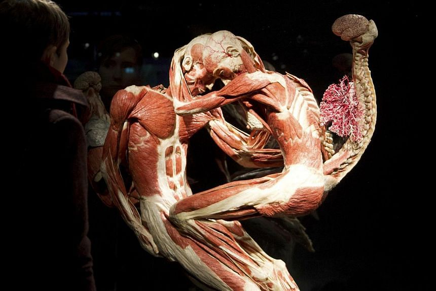 """A visitor looks at plastinated human bodies during a press preview prior to the opening of a """"Body Worlds"""" permanent exhibition by German anatomist Gunther von Hagens at the Menschen Musem in Berlin Feb 17, 2015.-- PHOTO: REUTERS"""