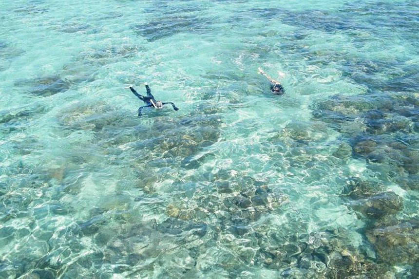 Corals in the Great Barrier Reef are eating small plastic debris in the ocean, Australian researchers said Tuesday, raising fears about the impact the indigestible fragments have on their health and other marine life. -- PHOTO: MADIHAH HAMID