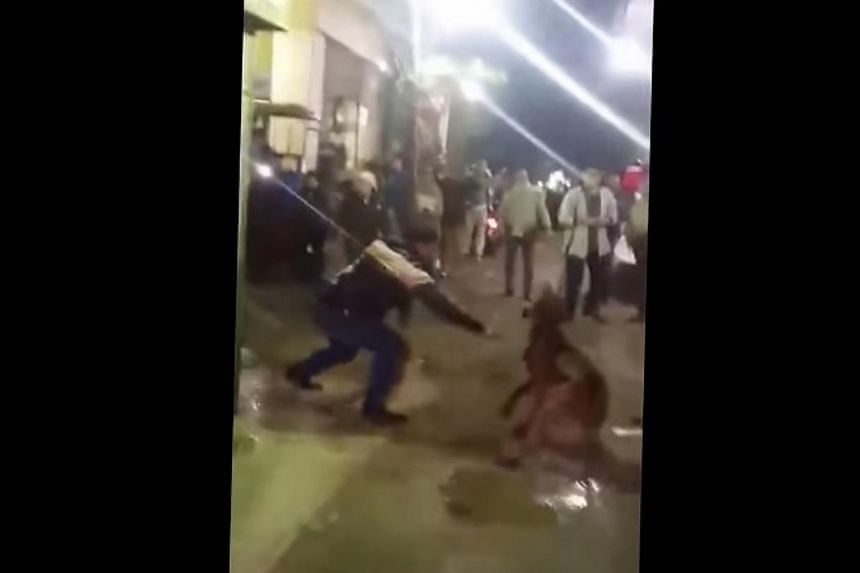 A screenshot from footage posted to YouTube shows one member of a group of assailants lunging at the dog with a knife.  Four men face trial in Egypt after horrific footage of the brutal street killing of a dog sparked outrage when it was ai