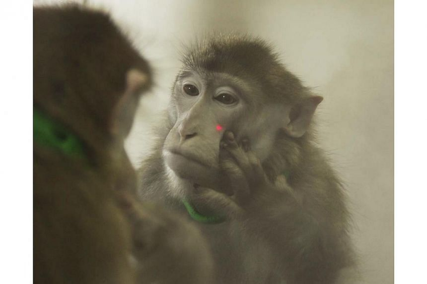 US officials in Louisiana are investigating how a dangerous and often deadly bacteria got out of a high-security laboratory at the Tulane National Primate Research Centre, USA Today reported. -- PHOTO: REUTERS