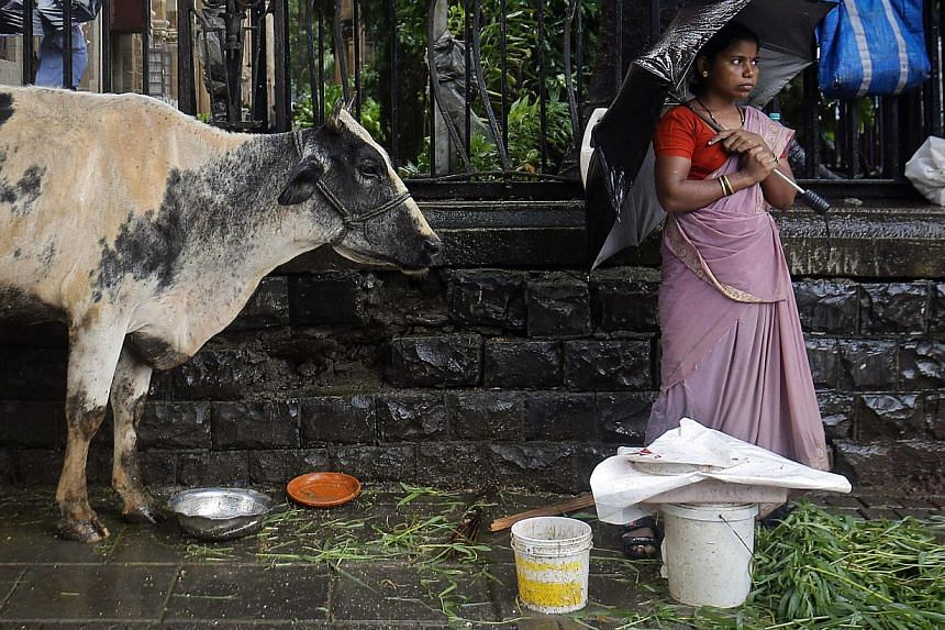 A streetside vendor stands on the pavement next to her cow as it rains in Mumbai, in this July 10, 2013 file photo. India's western state of Maharashtra has introduced a ban on beef so strict that even possession could land you in jail for five years