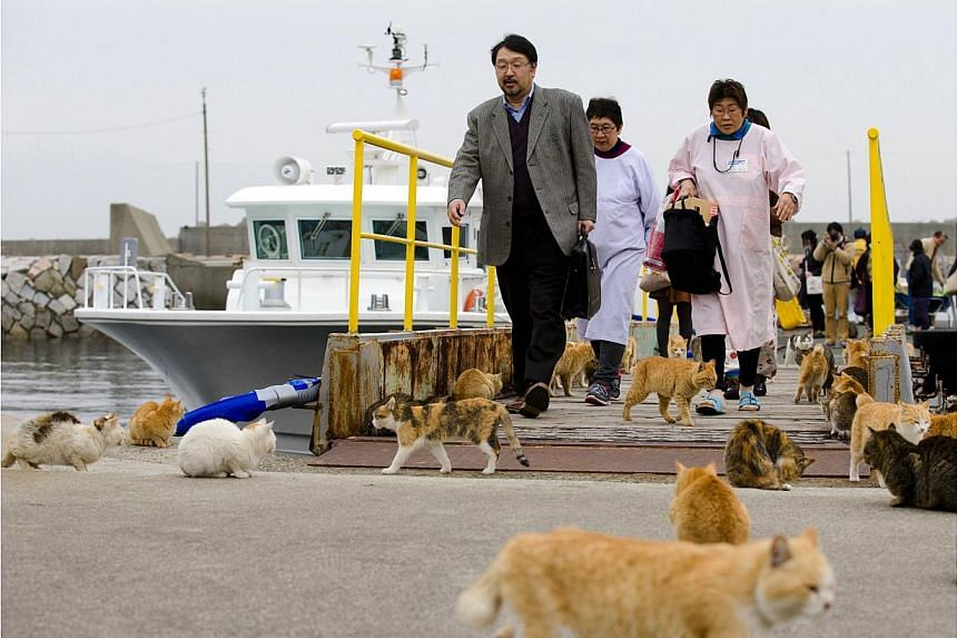 Cats surround people as they get off a boat at the harbour on Aoshima Island in Ehime prefecture in southern Japan on Feb 25, 2015. -- PHOTO: REUTERS