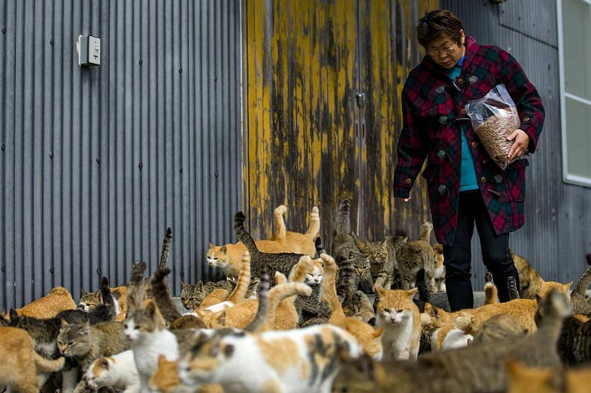 Cats crowd around village nurse and Ozu city official Atsuko Ogata as she carries a bag of cat food to the designated feeding place on Aoshima Island in Ehime prefecture in southern Japan on Feb 25, 2015. -- PHOTO: REUTERS