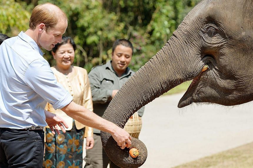 Prince Williamfeeds carrots to Ran Ran, a 13-year-old female elephant at the Xishuangbanna sanctuary in southern Yunnan province, China, on March 4, 2015. -- PHOTO: EPA