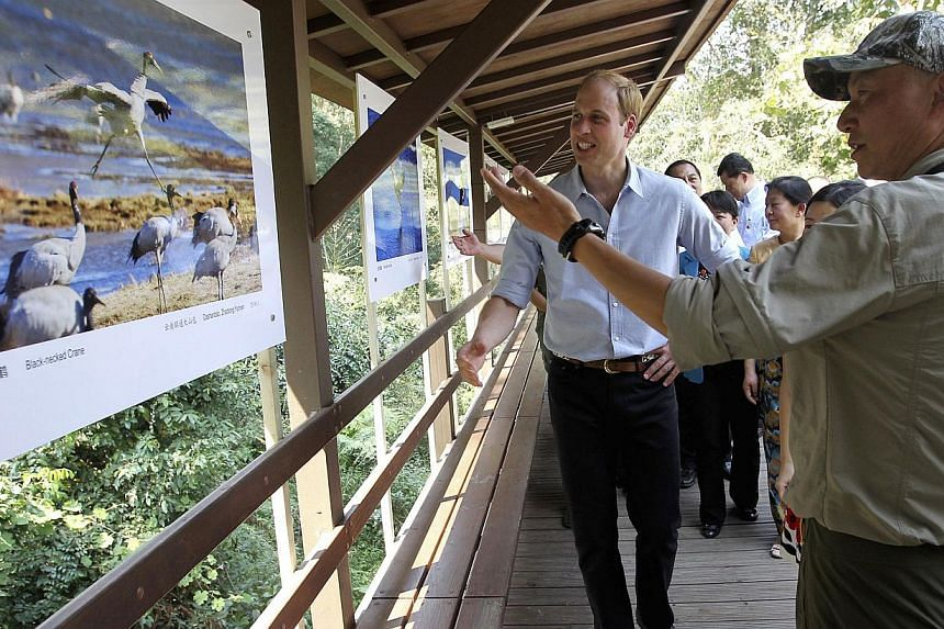 Prince Williamlistens to a Chinese wildlife photographer as he visits a wildlife photographic exhibition in Xishuangbanna, Yunnan province, on March 4, 2015. -- PHOTO: REUTERS