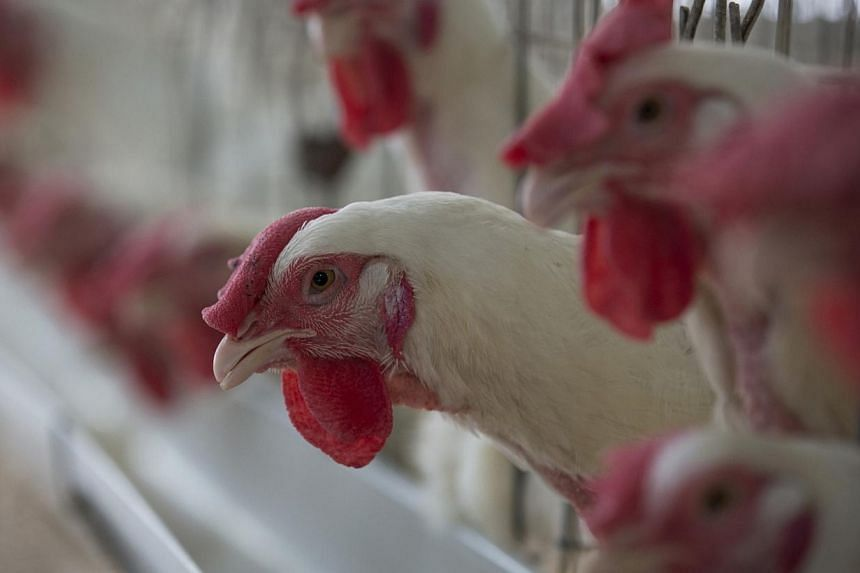 Fast-food giant McDonald's announced Wednesday it would stop serving chicken raised with antibiotics that are important to human health, as worries grow over resistance to crucial drugs. -- PHOTO: REUTERS
