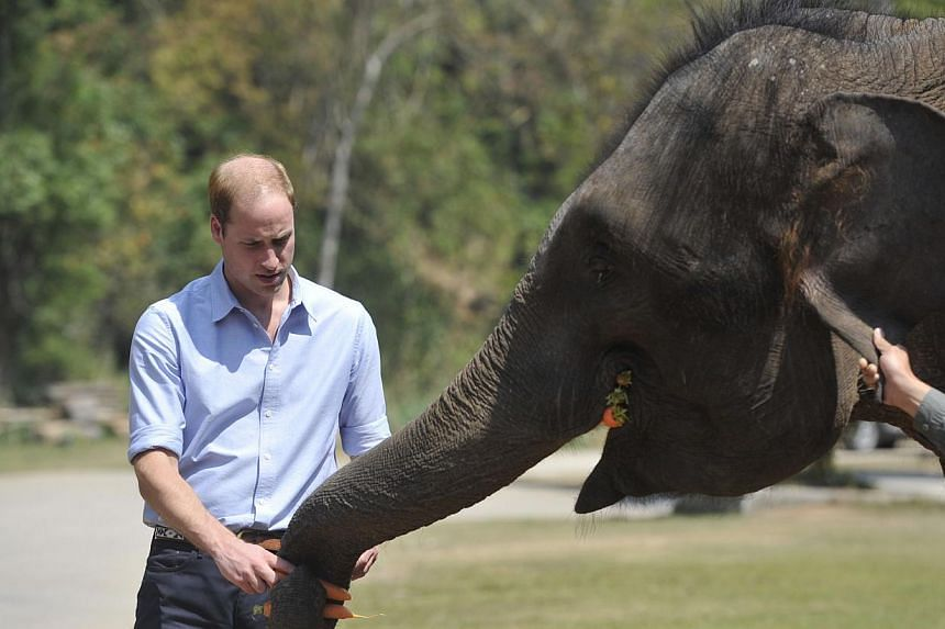 Britain's Prince William feeds a baby elephant in the wild elephant valley in Xishuangbanna, or Sibsongbanna Dai autonomous prefecture, southwest China's Yunnan province on Mar 4, 2015. He won praise from Chinese Internet users after he visited an el