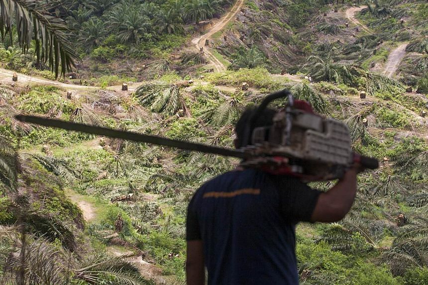 Indonesia is under international pressure to curb deforestation and destruction of carbon-rich peatlands and forests that palm oil and mining companies say they need for expansion. -- PHOTO: AFP