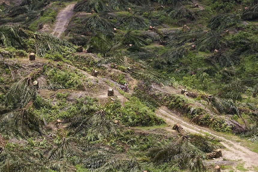 Indonesia, home to the world's third-largest tropical forests and a powerful palm oil industry, will extend a ban on forest clearing, a government official said on Wednesday. -- PHOTO: AFP