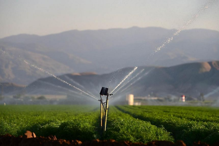 Fields of carrots are watered in Kern County, some 160km north of Los Angeles, California, on March 29, 2015.California announced sweeping state-wide water restrictions for the first time in history on Wednesday in order to combat the region's