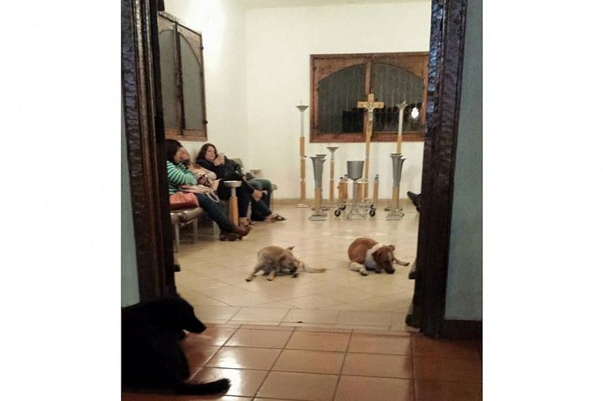 Ms Urrutia's photos of the dogs at the funeral service received almost 200,000 likes and more than 50,000 shares since March 16.   -- PHOTO: PATRICIA URRUTIA/ FACEBOOK