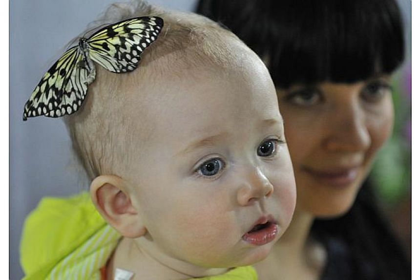 A butterfly lands on the head of a baby during a butterflies exhibition in Bishkek, Kyrgyzstan,on Jan 9, 2015. Researchers on Thursday reported a series of experiments that demonstrated that babies actively sought to learn when they witnessed s