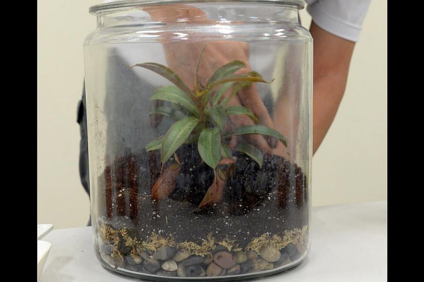 Terrariums Gaining Popularity For Their Low Maintenance And Pretty