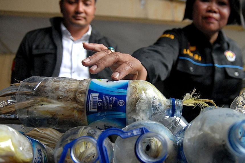 A police officer holds a water bottle which with a yellow-crested cockatoo put inside for illegal trade at the customs office of Tanjung Perak port in Surabaya, East Java province, Indonesia, on May 4, 2015 in this picture taken by Antara Foto. -- PH