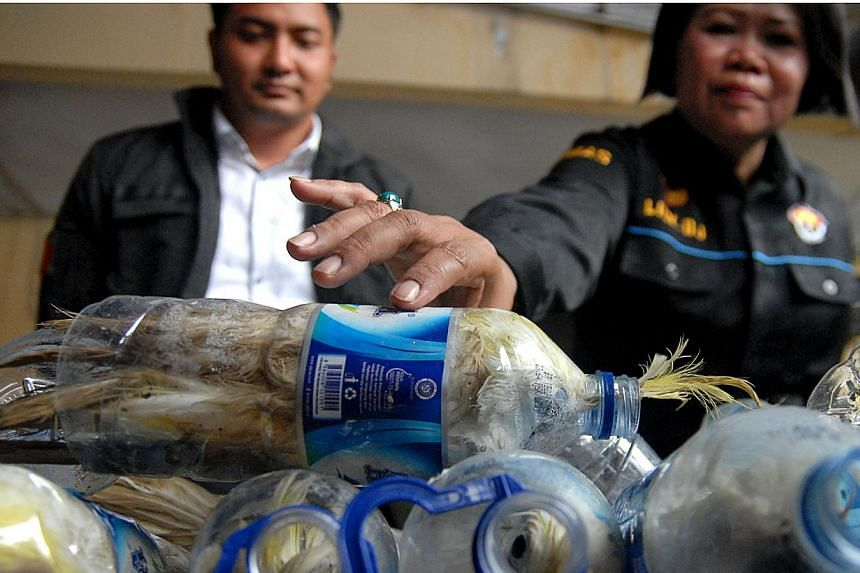 A police officer holds a water bottle which with a yellow-crested cockatoo put inside for illegal trade at the customs office of Tanjung Perak port in Surabaya, East Java province, Indonesia, May 4, 2015. -- PHOTO: REUTERS