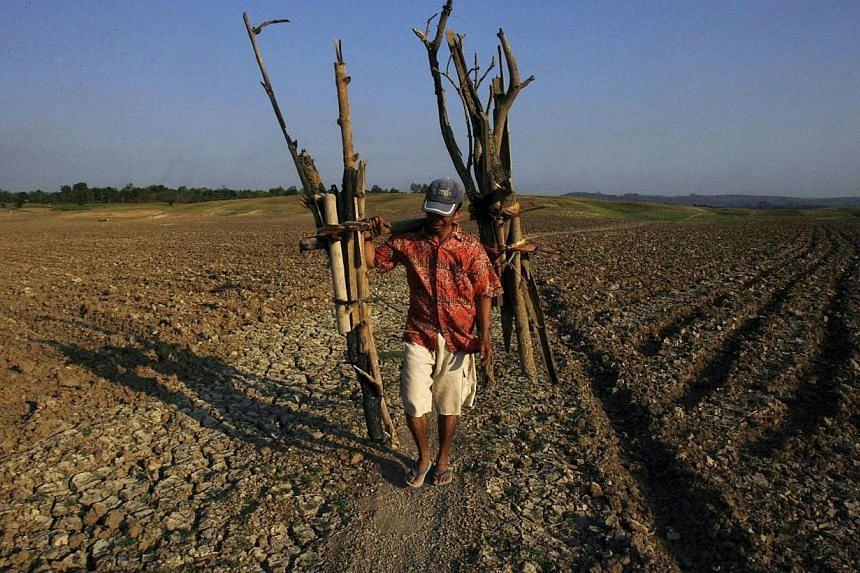A man walks through a dried-up dam after collecting firewood in Gondang village of East Java province in this Aug 4, 2009 file photograph. -- PHOTO: REUTERS