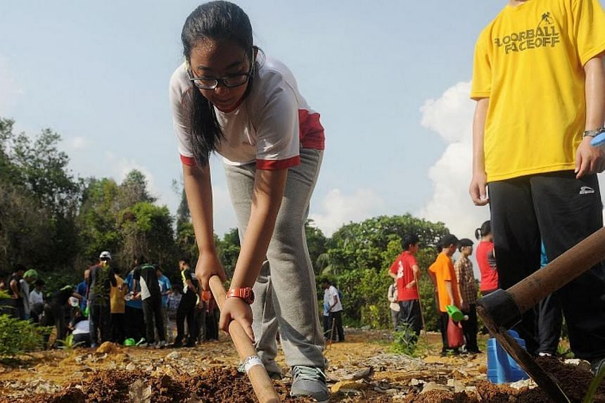 Students from the School of Science and Technology planted eight saplings in Pulau Ubin on Wednesday, as part of a new reforestation activity by learning institution Outward Bound Singapore (OBS). -- PHOTO:NATIONAL YOUTH COUNCIL