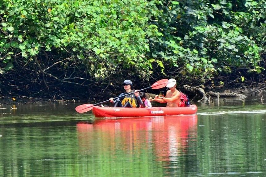 Mr Ben Lee spotted a couple and their young child kayaking at Sungei Buloh Wetland Reserve, despite canoes and kayaks not being allowed due to the presence of crocodiles. -- PHOTO: BEN LEE