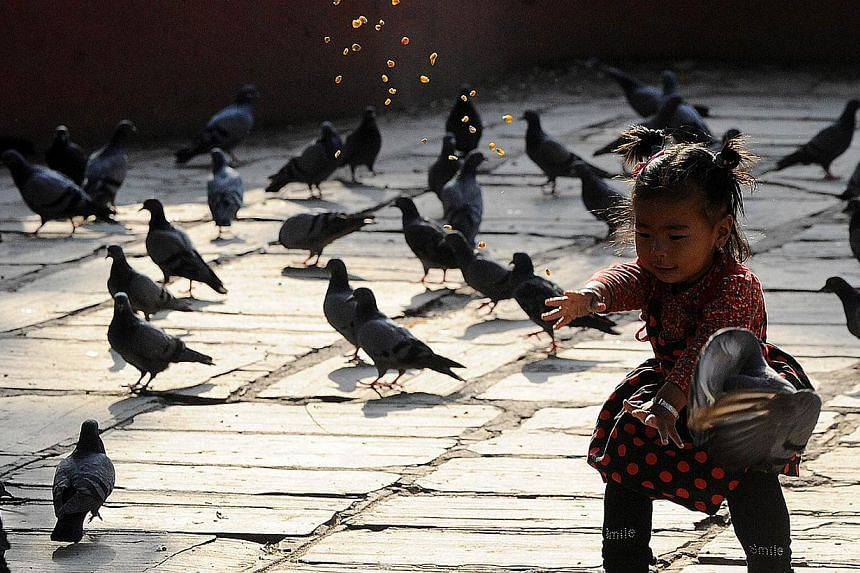 A Nepalese child looks at pigeons at a temple in Kathmandu on May 25, 2015 as the country marks one month since a deadly earthquake struck the country, killing more than 8,600 people. The April 25 disaster was followed by another massive quake on May