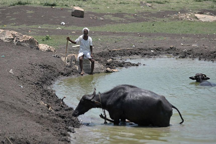 An Indian man sits under the hot sun next to his cattle on the outskirts of Hyderabad on May 25, 2015. More than 430 people have died in two Indian states from a days-long heatwave that has seen temperatures nudging 50 degrees Celsius (122 degrees Fa