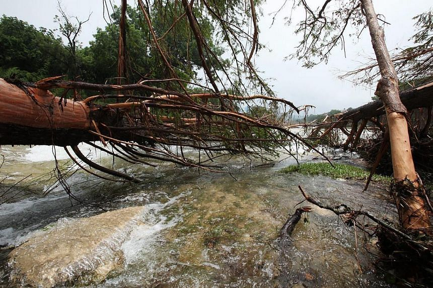 Destroyed trees seen at Cypress Creek and Blanco River in Wimberly, Texas, on May 27, 2015. -- PHOTO: EPA