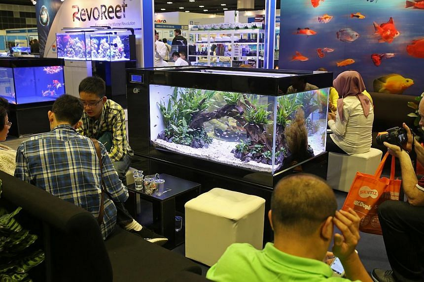 Visitors (inset) at ornamental fish show Aquarama at Suntec yesterday. Singapore is the largest exporter of ornamental fish like betta (above) globally, but exports have fallen to levels similar to those a decade ago.
