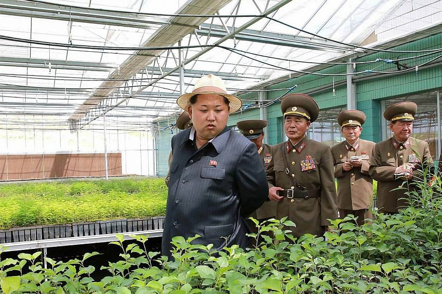 This undated photo released by North Korea's official Korean Central News Agency (KCNA) on May 30, 2015 shows North Korean leader Kim Jong-Un (centre) visiting the general tree nursery under construction by the Korean People's Army.  North