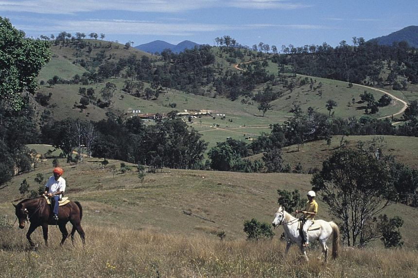 Besides indulging in wine, you can also go horse riding in Hunter Valley. -- PHOTO: JEFF DREWITZ, DESTINATION NSW