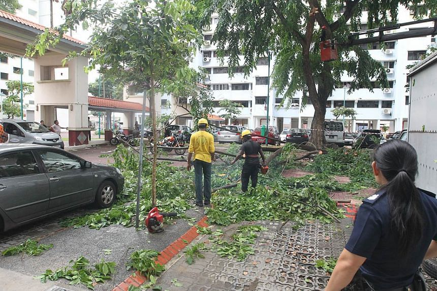 The branch of a 40-year-old tree broke during a storm and damaged two vehicles that were parked underneath it. -- PHOTO: SHIN MIN DAILY NEWS