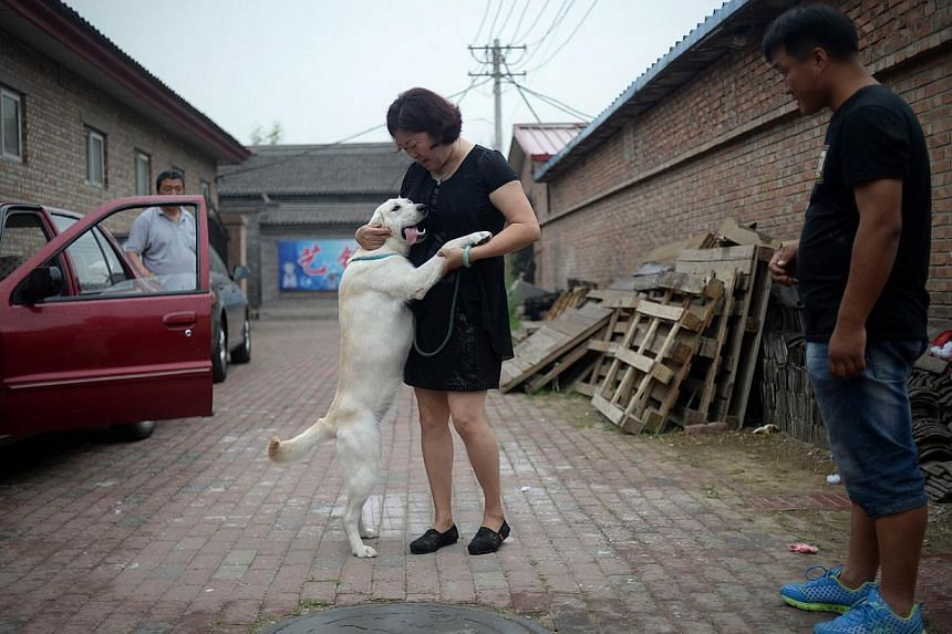 A woman holding her dog as she prepares to leave after sending her dog to a dog training school in Beijing on June 4, 2015. -- PHOTO: AFP