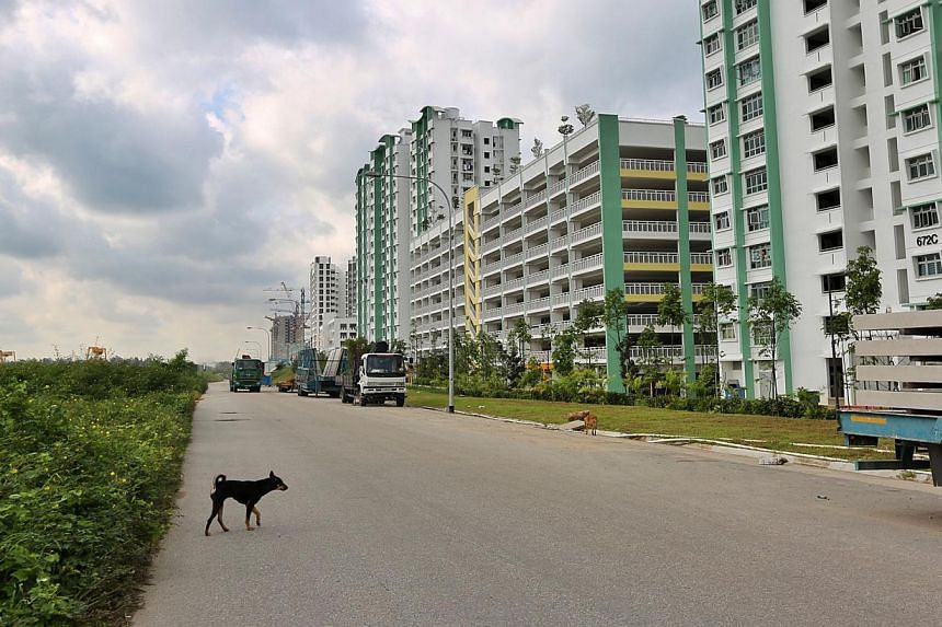 According to the residents interviewed by Chinese paper Shin Min Daily News, people have been witnessed leaving food for stray dogs in a field close to Edgefield Plains. -- PHOTO: SHIN MIN DAILY NEWS