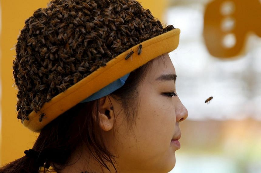 A performer wearing a hat covered with bees at an exhibition about beekeeping in Beijing on April 3, 2015.