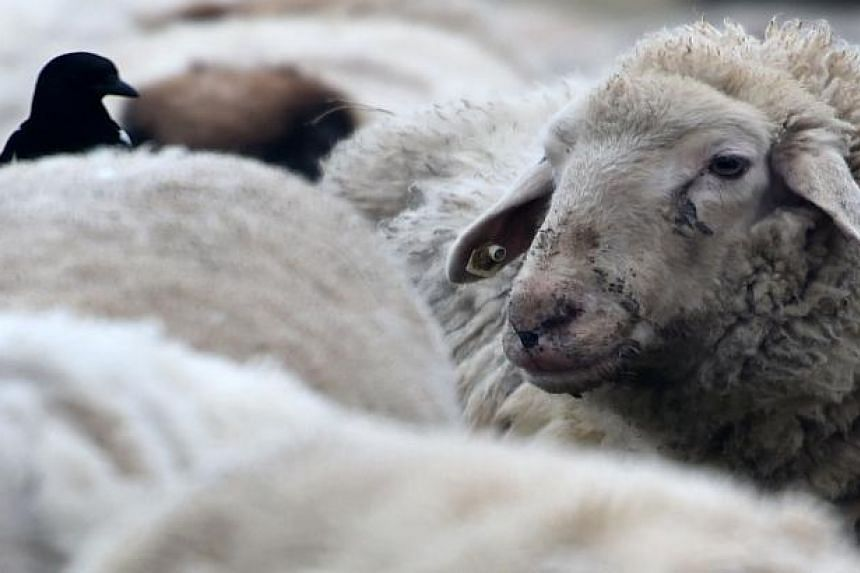 EU lawmakers on Wednesday backed a ban on cloning farm animals and products derived from them, citing public unease.